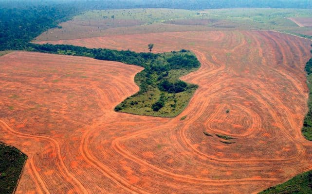 Abholzung Brasilien