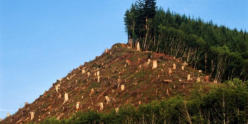 Wälder vernichtet