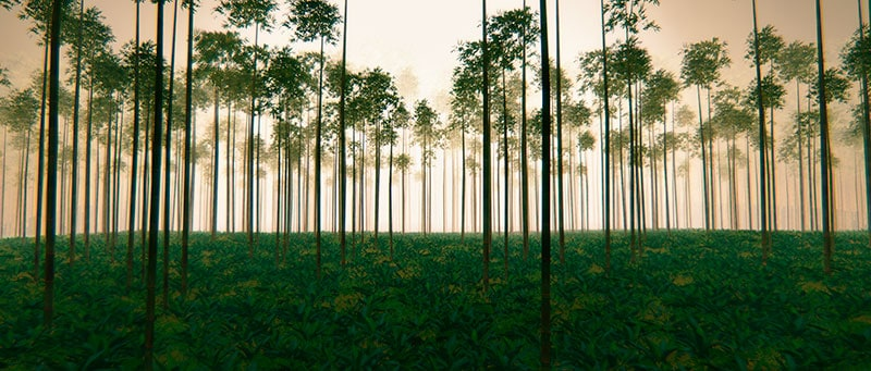 bambuswald sonnenaufgang
